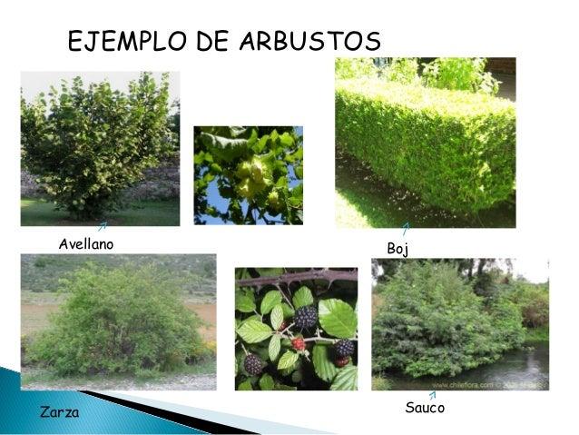 Las plantas - Lista nombre arbustos ...