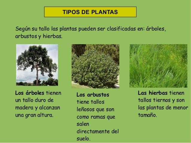 Las plantas for Cuales son las plantas ornamentales y sus nombres