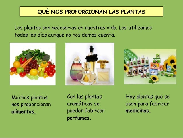Que son las plantas las plantas for Que son plantas ornamentales