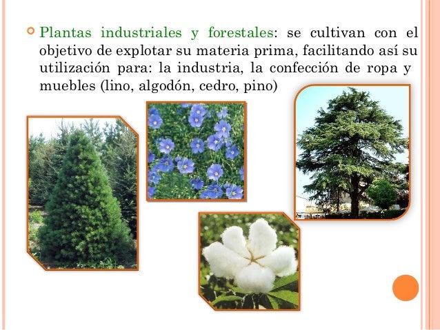 Las plantas for Todas las plantas ornamentales