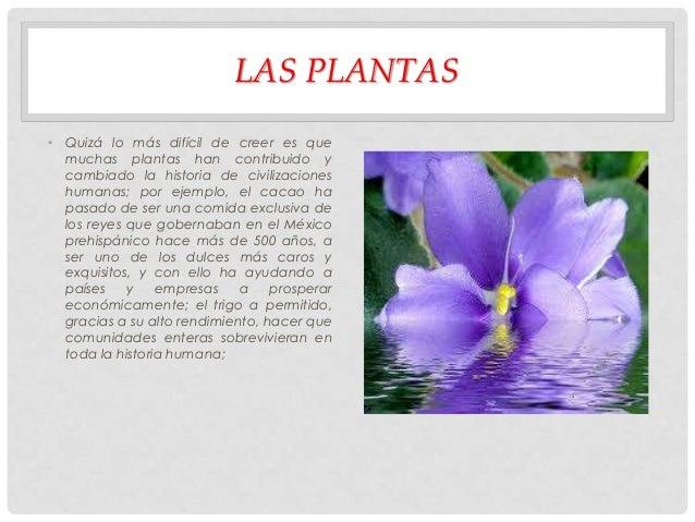 LAS PLANTAS • Quizá lo más difícil de creer es que muchas plantas han contribuido y cambiado la historia de civilizaciones...
