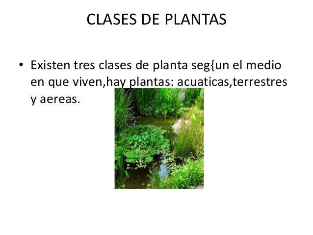 clases de plantas existen tres clases de planta seg un