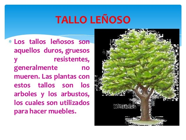 Las plantas for Cuales son los arboles perennes