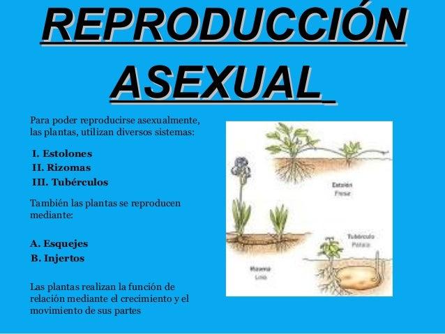 Plantas que se reproducen asexualmente por esquejes