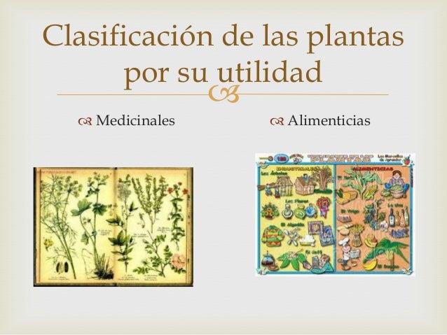 Las plantas jeanet sarmiento for Clasificacion de las plantas ornamentales