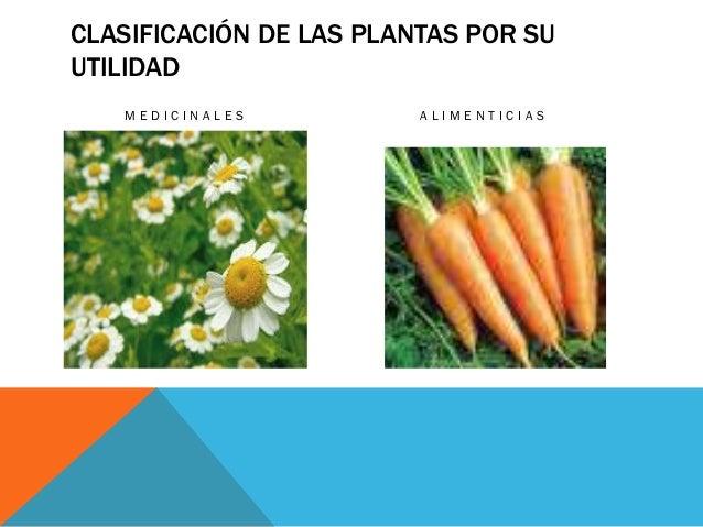 Las plantas yessenia flores for Clasificacion de las plantas ornamentales