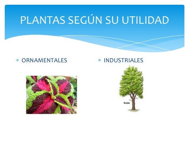 Las plantas for Clasificacion de las plantas ornamentales