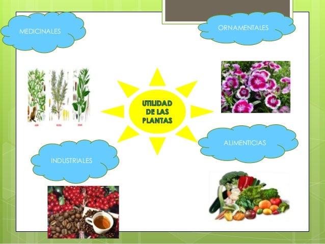 Las plantas por su utilidad for Como cuidar las plantas ornamentales