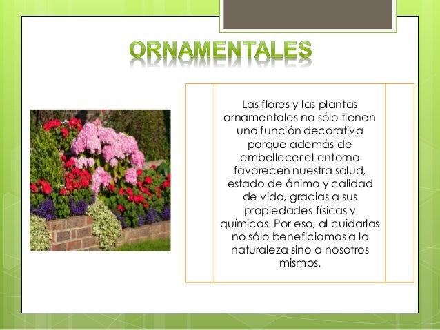 Las plantas por su utilidad for 5 nombres de plantas ornamentales