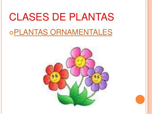 Las plantas y sus categorias for 5 nombres de plantas ornamentales