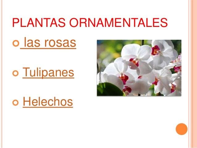 Las plantas y sus categorias for Plantas ornamentales ejemplos