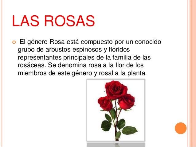 Las plantas y sus categorias for Ejemplos de plantas ornamentales
