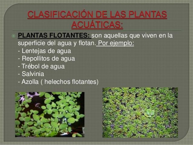 PowerPoint  Las plantas acuáticas y terrestres