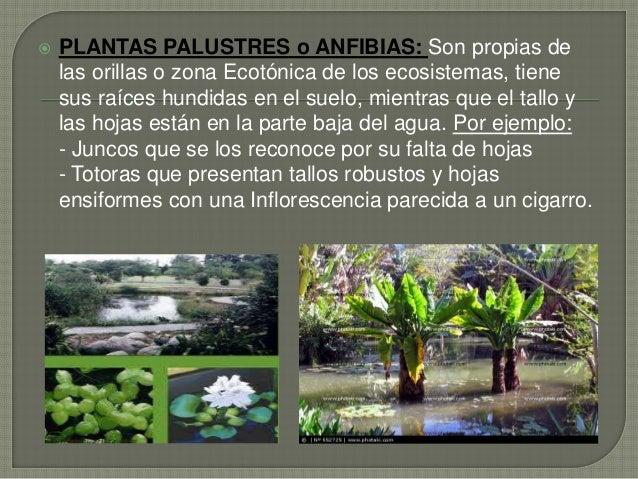 Powerpoint las plantas acu ticas y terrestres for Que se planta en septiembre