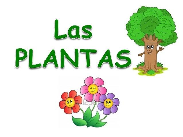 Las plantas for Plantas en la pared
