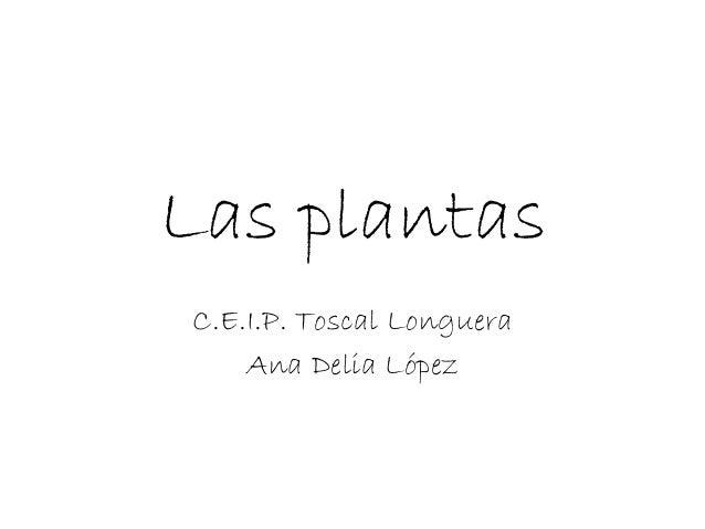 Las plantas C.E.I.P. Toscal Longuera Ana Delia López