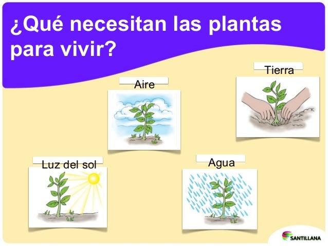 Las plantas - Plantas que no necesitan luz ...