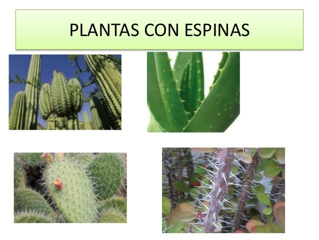 Las plantas for Mezclas de plantas medicinales