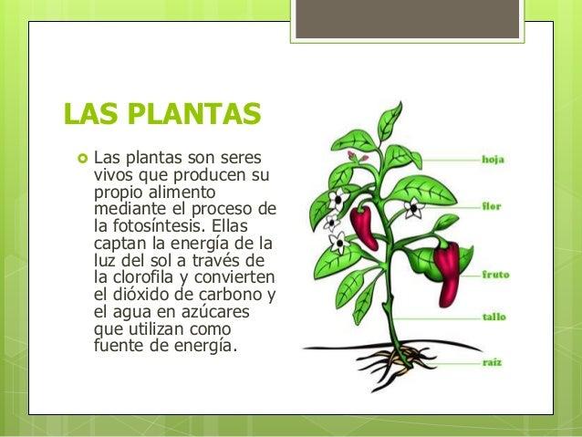 Que son las plantas las plantas for Que son la plantas ornamentales