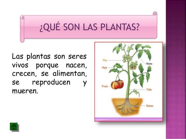 Las plantas for Que son plantas ornamentales