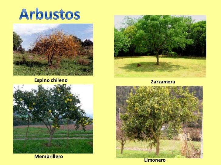 Las plantas 2 - Arbustos nombres ...
