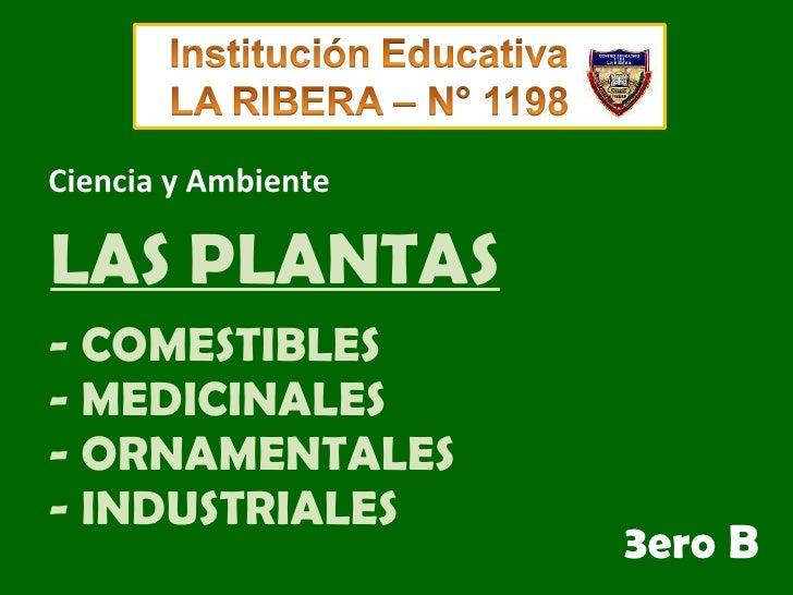 - COMESTIBLES - MEDICINALES - ORNAMENTALES - INDUSTRIALES 3ero   B Ciencia y Ambiente LAS PLANTAS