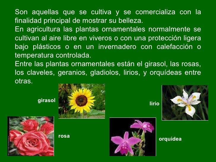 Las plantas primaria ie n 1198 la ribera aula de for Cuales son las plantas ornamentales y sus nombres