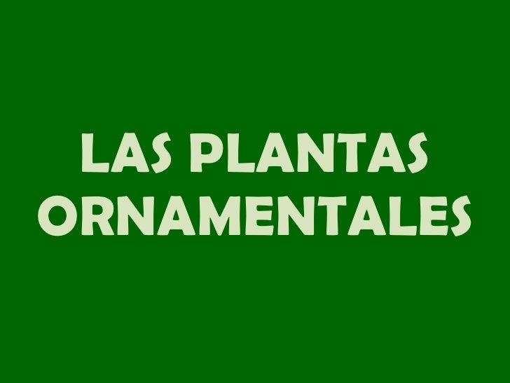 Las plantas primaria ie n 1198 la ribera aula de Las plantas ornamentales