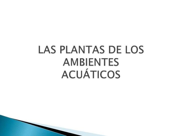 Las plantas acuaticas for Concepto de plantas ornamentales