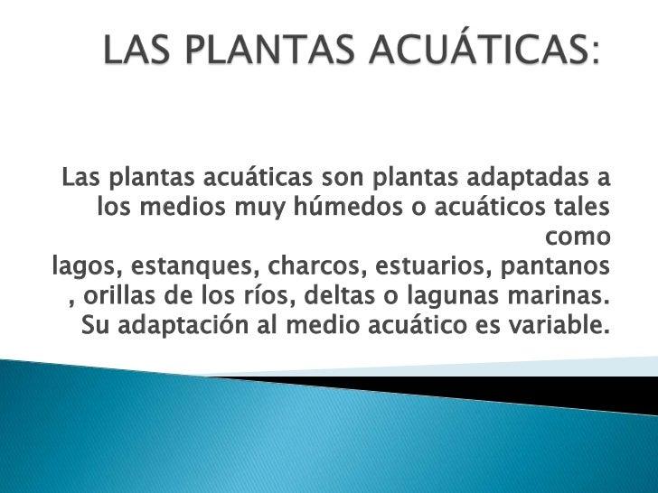 Las plantas acu ticas for Concepto de plantas ornamentales