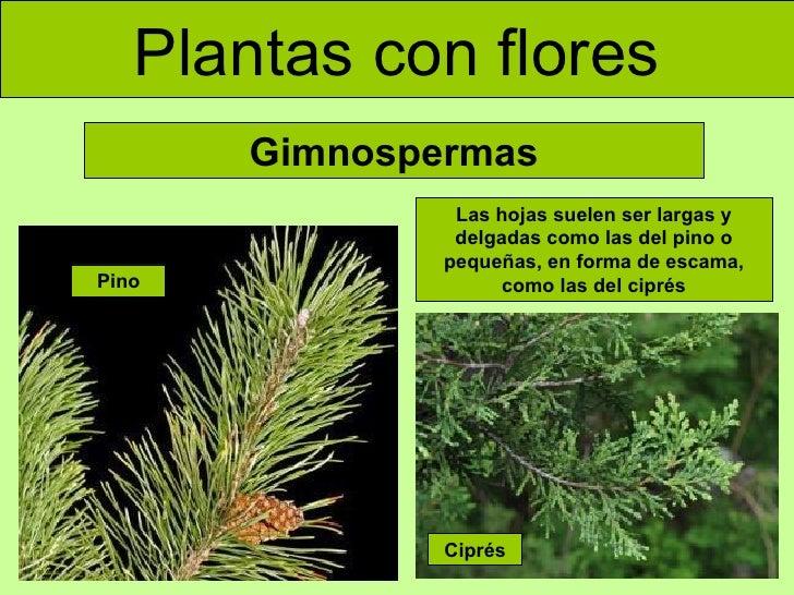Las plantas (adaptada)