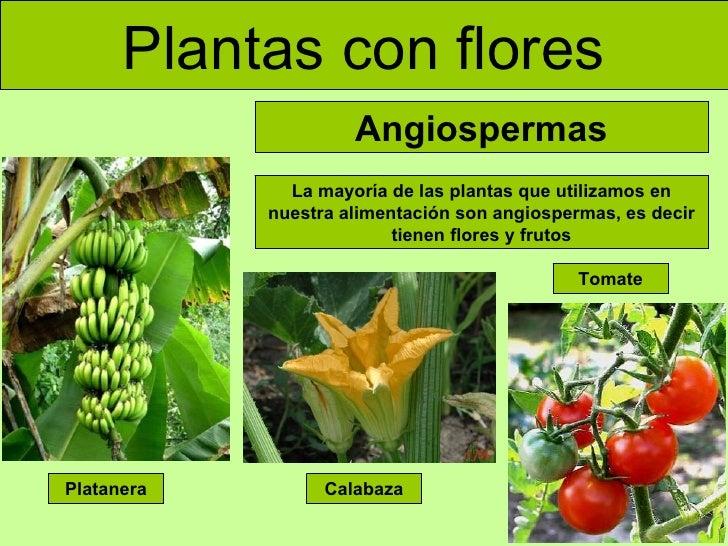 Las plantas adaptada for Cuales son las plantas ornamentales y sus nombres