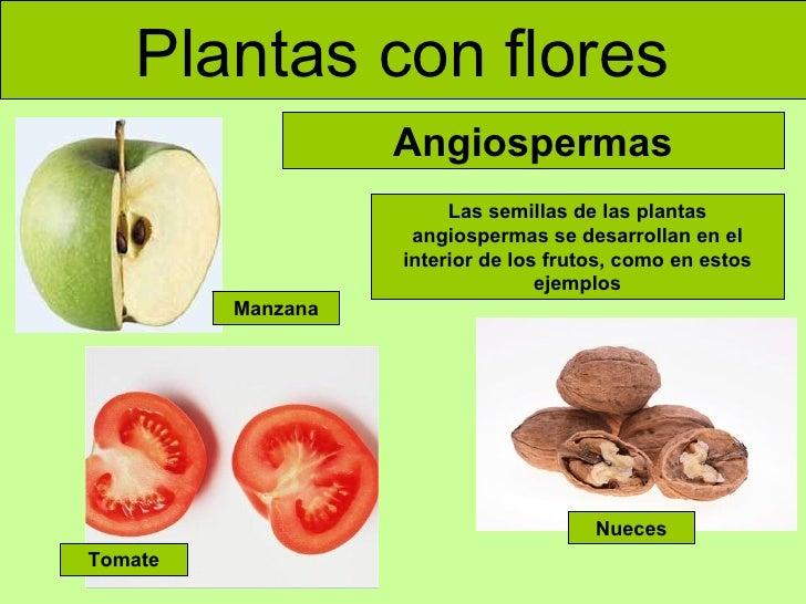 plantas con flores angiospermas las semillas de las plantas