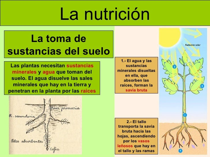 Las plantas adaptada for Sustancias del suelo