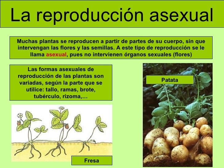 la reproducción asexual las formas asexuales de reproducción de las