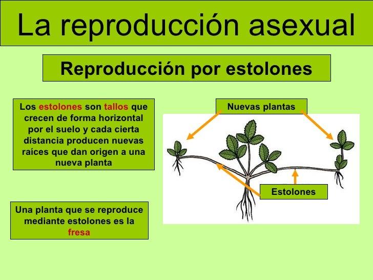 Reproduccion asexual de las plantas pdf to word