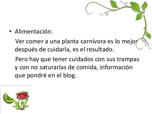 Las plantas carn voras - Tipos de plantas y sus cuidados ...