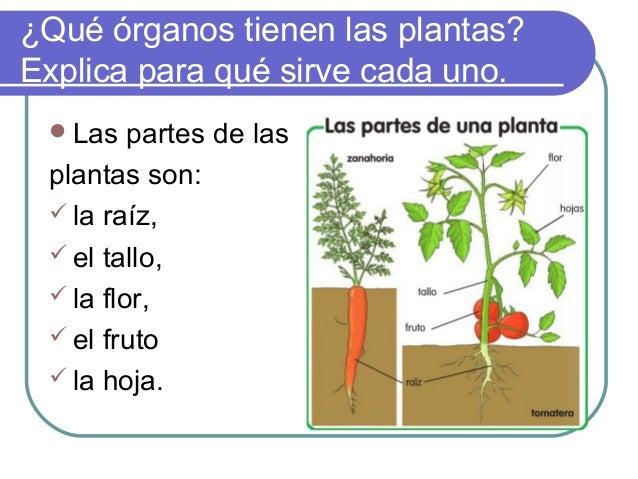 Que son las plantas las plantas de guadalupey raquel for Cuales son las plantas ornamentales