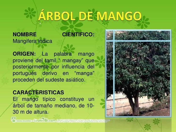 Las plantas del loyola for Las caracteristicas de los arboles