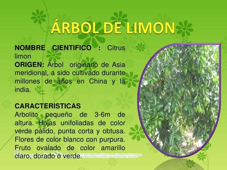 Las plantas del loyola for Arboles con sus nombres y caracteristicas