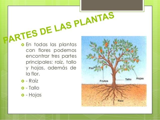 Las plantas para primaria - Todo sobre las plantas ...