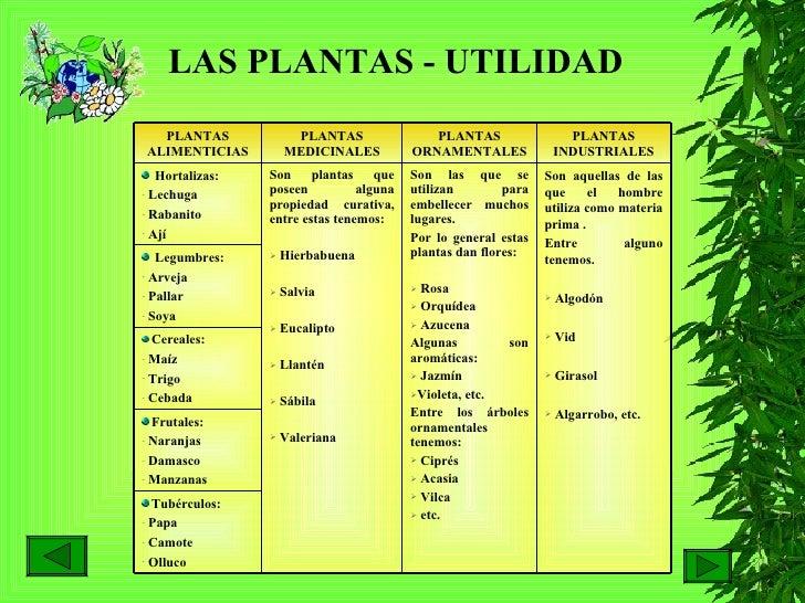 Las plantas hilda for Cuales son las plantas ornamentales y sus nombres