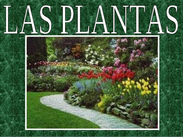 Viveros  ¿Qué necesitan las plantas para vivir?