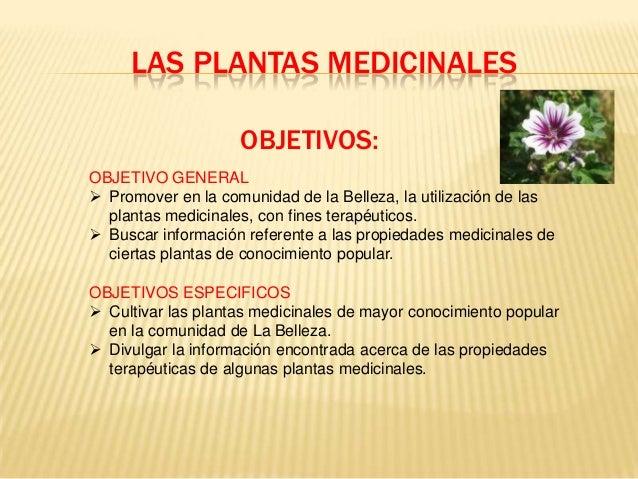 Las plantas medicinales for Proyecto de investigacion de plantas ornamentales