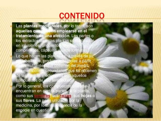 Las plantas medicinales for Mezclas de plantas medicinales