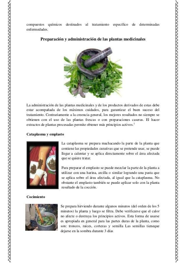 Las plantas medicinales y sus efectos en el ser humano for Mezclas de plantas medicinales