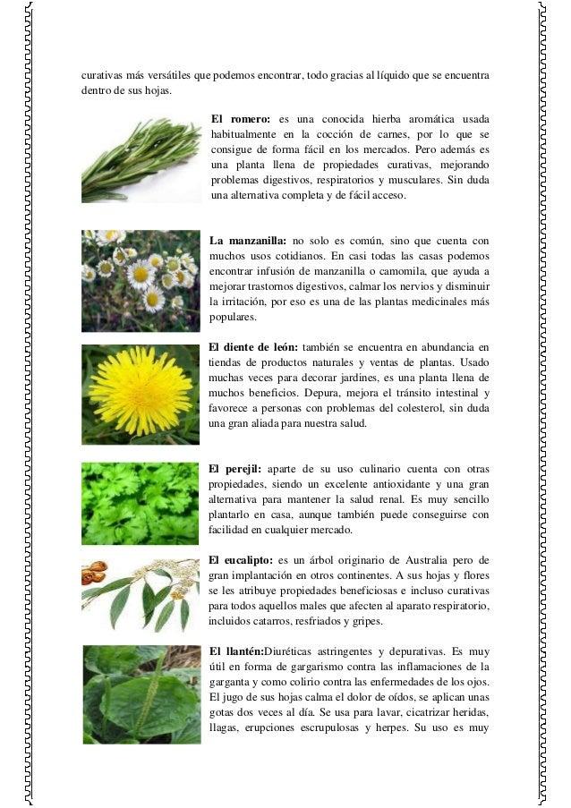 Las plantas medicinales y sus efectos en el ser humano for Cuales son las plantas ornamentales y sus nombres