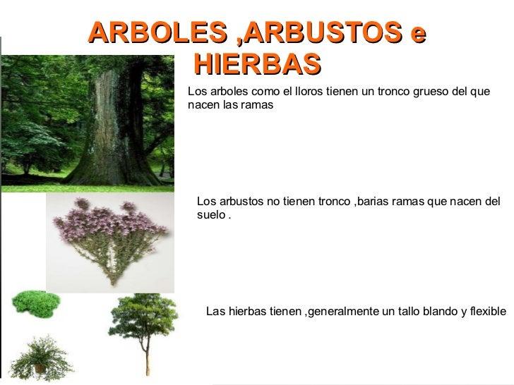 Las plantas - Arboles y arbustos ...