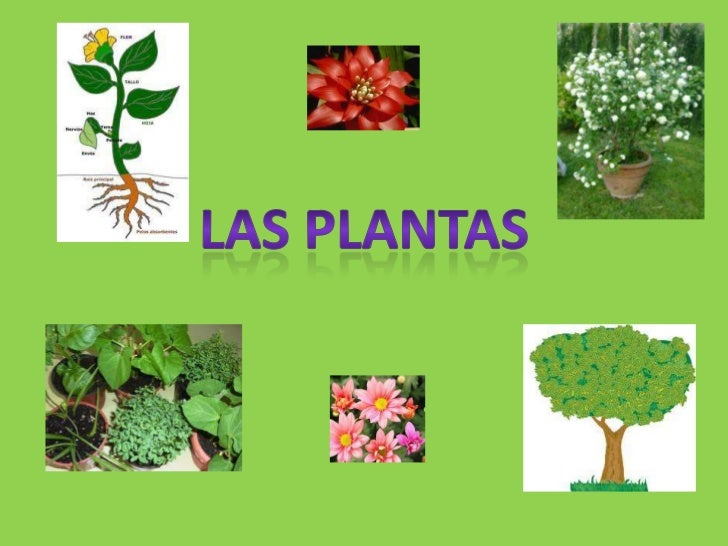 Las plantas power point for 5 plantas decorativas