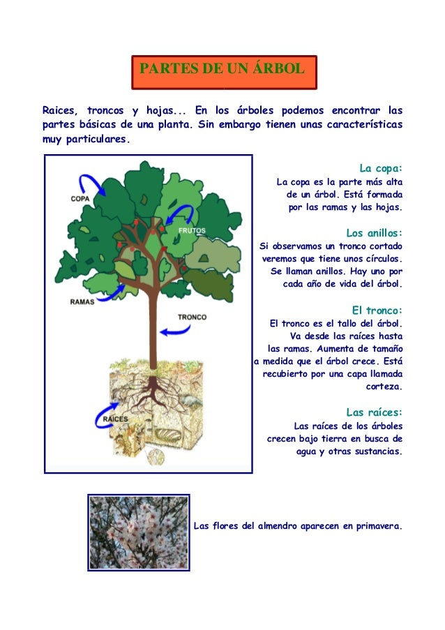 Las plantas usos for Cuales son las partes de un arbol